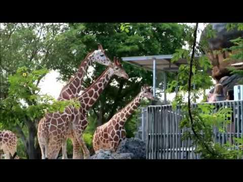 Miami Zoo - Tour - Activities And Animals At Zoo Miami