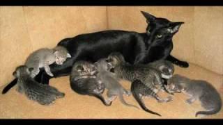Кошки в Древнем Египте.wmv