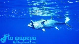 Tuna Fishing  Limassol 2018