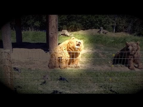 Andy Woods - Bear Catches A Bread Frisbee