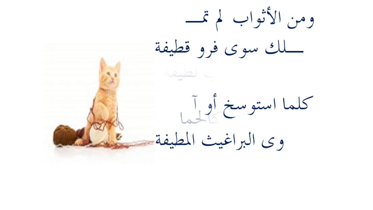 قصيدة الهرة والنظافة بالإلقاء Youtube
