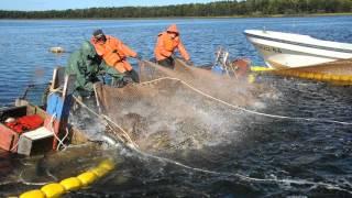Сахалин. Рыбалка.(, 2012-10-02T11:19:59.000Z)