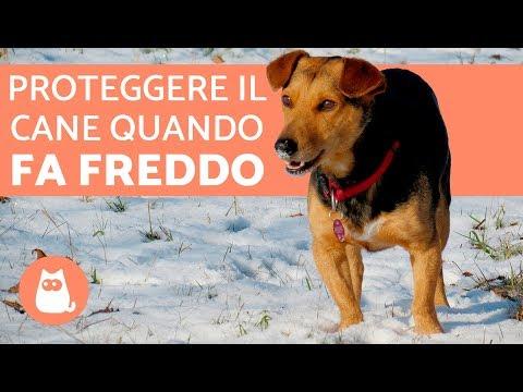 Proteggere il cane dal freddo 🐶❄️ Consigli e precauzioni!