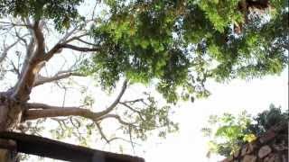 1 Xaamna Fii - Les dessous de Gorée