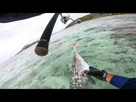 Big Fish And Racing Crabs In FIJI!