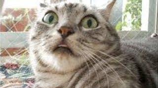 Lustige Katzen Compilation 2014 [Neue HD]