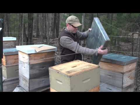Winter Feeding Honeybees