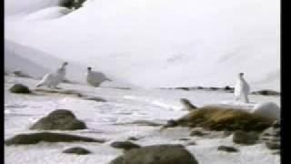 Harun Yahya Polar Birds