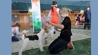 """19 апреля 2015,  Барнаул, Юный хендлер, """"Ребёнок и собака"""",  Выставка собак АЗИя-2015"""