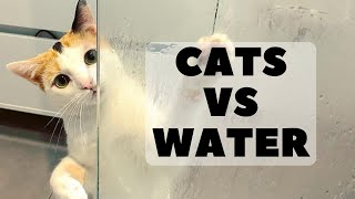 Oh No! Cats Hate Water! Funny Cats and Dogs in the Water Compilations Ep2 2020 | Pets Town