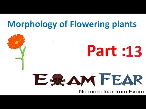 Biology Morphology of Flowering Plants part 13 (Leaf: parts-lamina, Petiole, Stipule) CBSE class 11