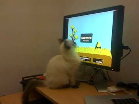 Cat Plays Video Game