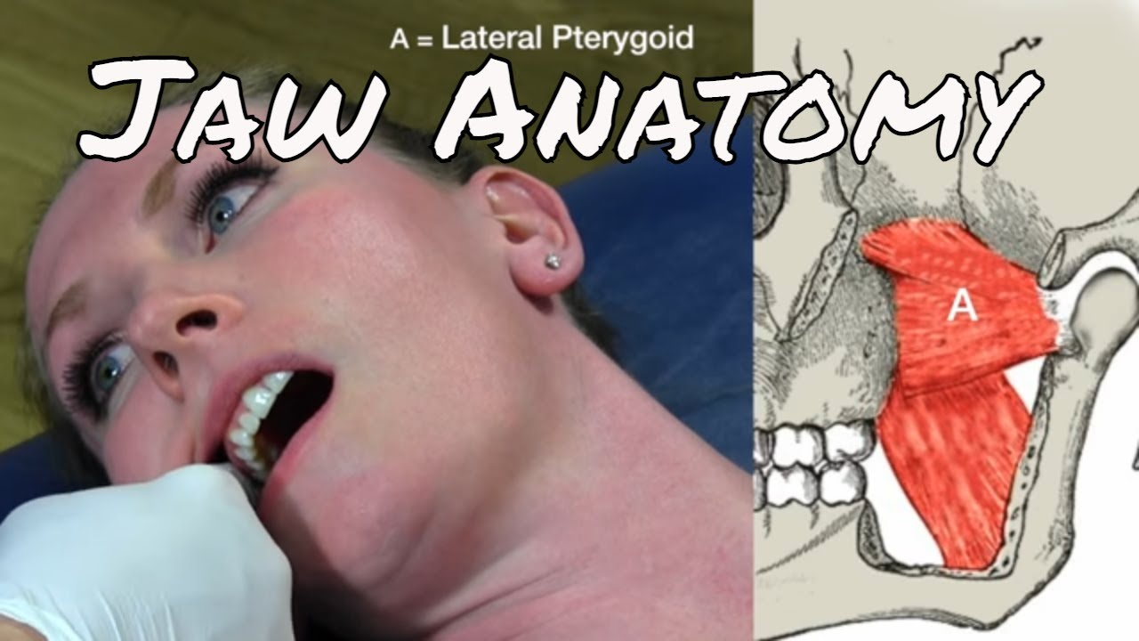 9 Muscles Of The Head And Jaw Motion Specific Release Youtube