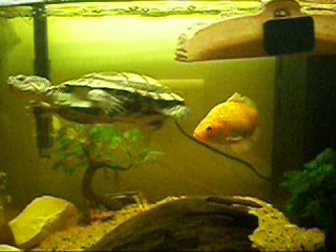 Video Tortue Avec Poisson 001 Mov Youtube