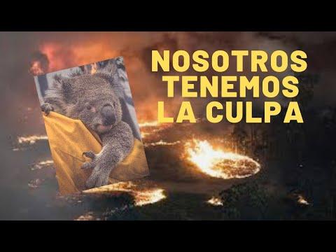 AUSTRALIA EN LLAMAS y nosotros tenemos la culpa, ¡Actuemos ya!  - Maritza Ariza