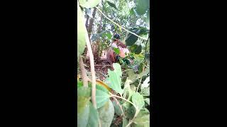 Orang lagi Mesum di hutan sepasang suami istri. Hot G