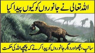Why Allah Created Animals in Urdu Hindi