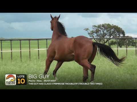 LOTE 10 - BIG GUY