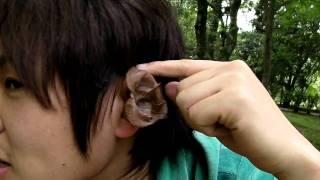 2011年 5月2日 鹿児島大学にて。 キクラゲは耳にそっくりです。 (SANY0010.MP4)