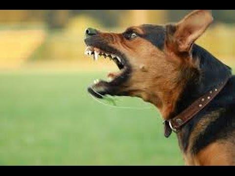 (VTC14)_ Cách xử lý khi bị chó tấn công