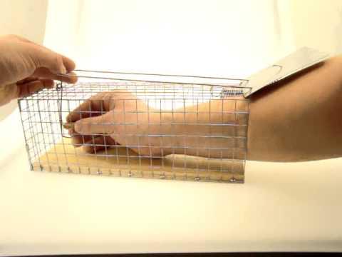151Своими руками живоловка