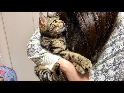 妹に3日間会えなかったのがさみしすぎてゴロゴロが止まらなくなってしまった猫w