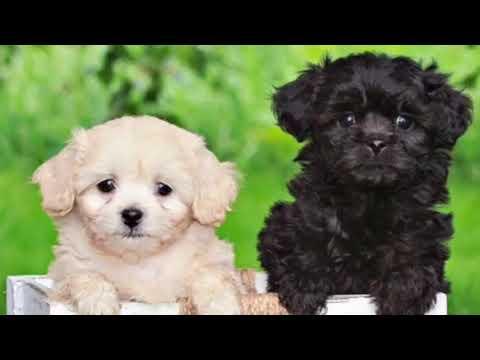 Top 10 Mix Dog Breeds