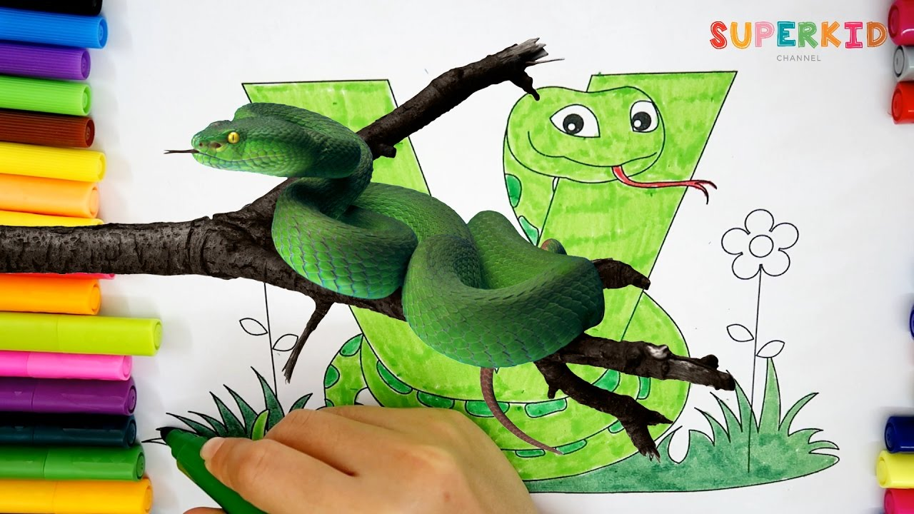 Letter V for Viper Snake Coloring Page - Learning alphabet and ...