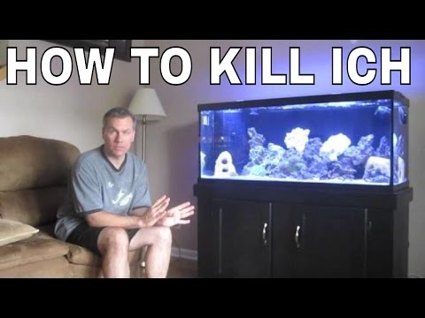 How To Kill Ich And Marine Velvet Parasite In Saltwater Aquarium: Saltwater Fish Dying
