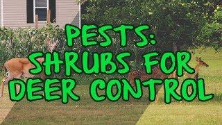 Pests: Shrubs for Deer Control