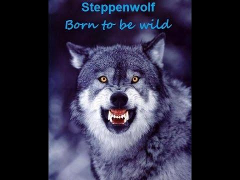 Steppenwolf -