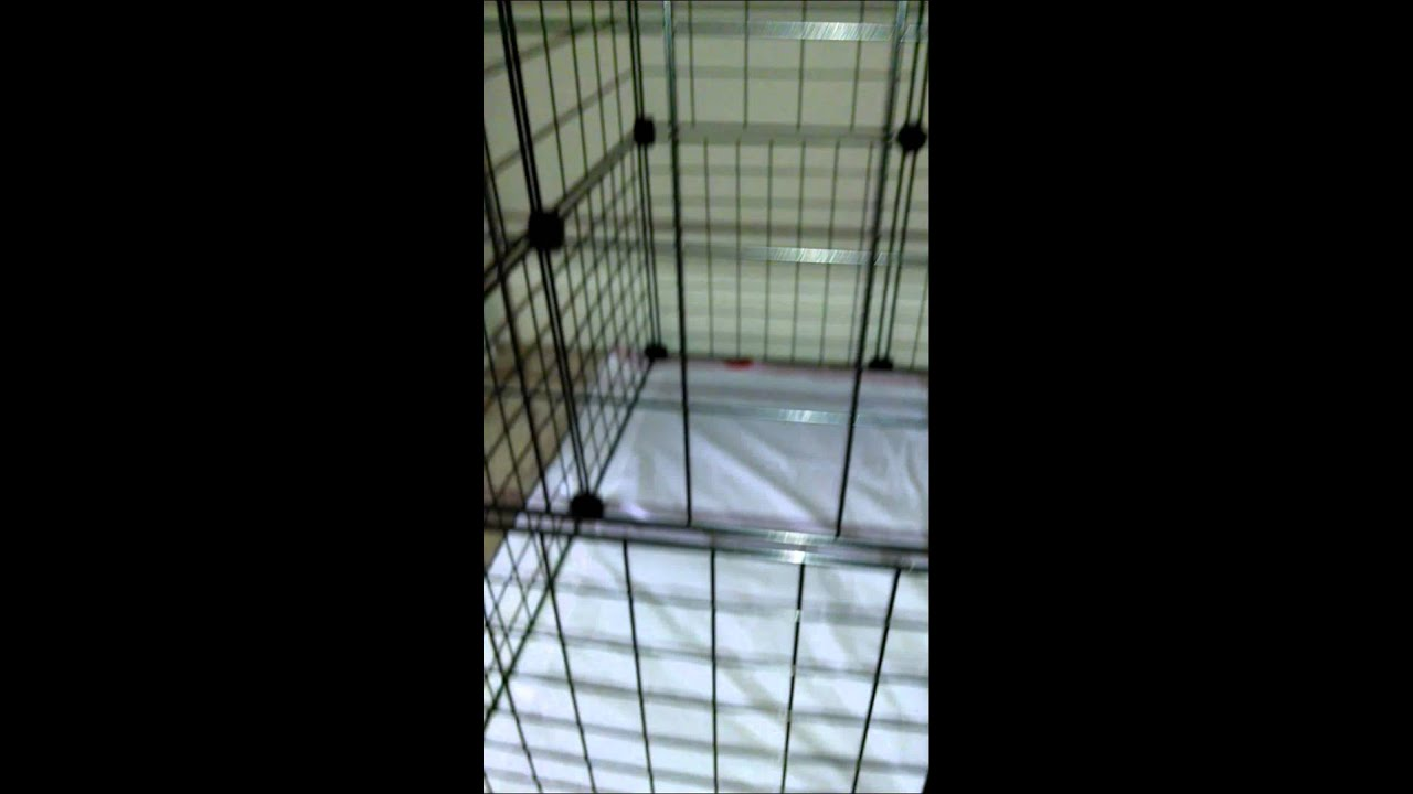 How To Crate Train My Rescue Dog