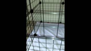 Diy Homemade Dog Crate