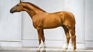 ТОП 5 самые красивые лошади мира Часть 2