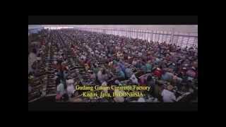 Fabrica de Gudang Garang - Gudang Factory - Indonesia - Stafaband