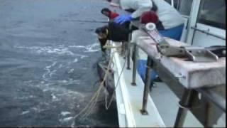 Japanese Tuna Fishing