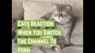 Cat's reaction when you switch your tv channel to porn | ShineAndComfort.com