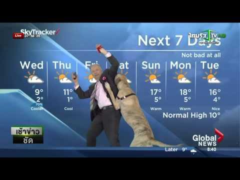 สุนัขป่วนรายการข่าวพยากรณ์อากาศ