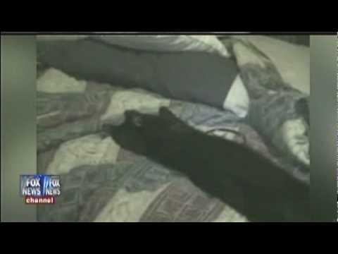 Talking Kitty on Fox News