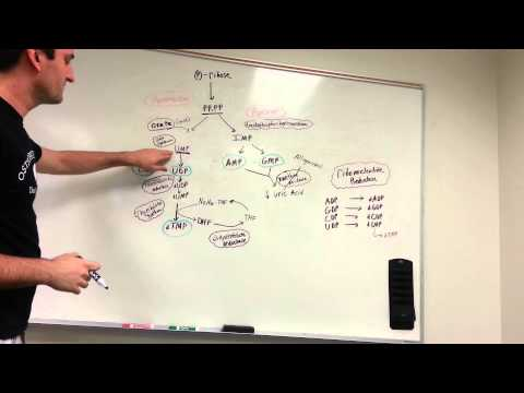 Purine and Pyrimidine synthesis pathway made easy!