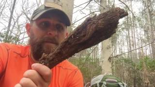 Dragon Tooth Hunt - Collecting Fatwood Option 4