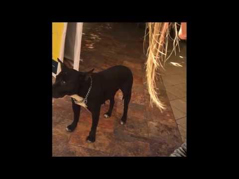 Guanajuato Mexico Tourism: Jardin de la Union Dog Begs for Food