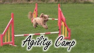 Dog Agility Camp - Poppy Cockapoo Training