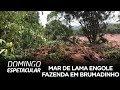 Pica-Pau em Português  1 hora de episódios  Desenhos ...