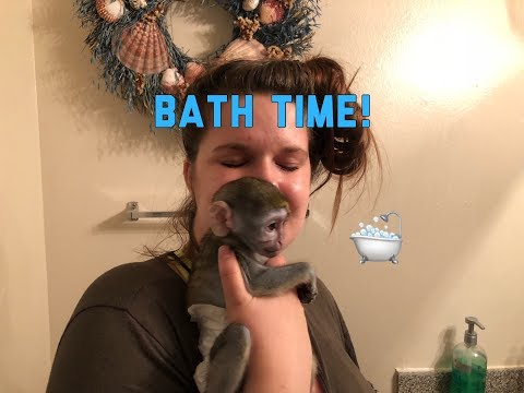 Baby monkey | Max gets a bath