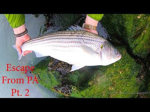 ESCAPE FROM PA Pt. 2 - Delaware Inlet KEEPER Striper