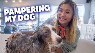 Pampering My Dog Reese!!   Chloe Kim