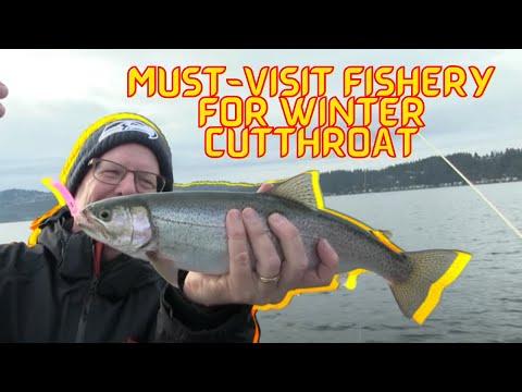 Lake Sammamish Winter Cutthroat