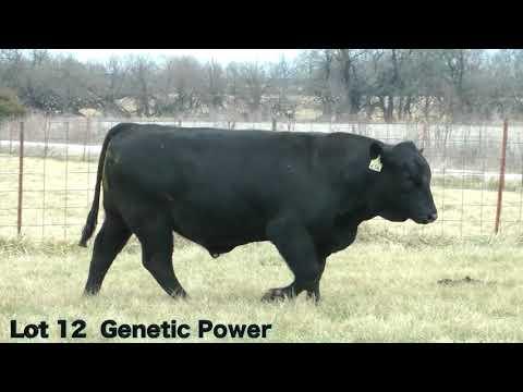 Lot 12 D656 JBarM Genetic Power