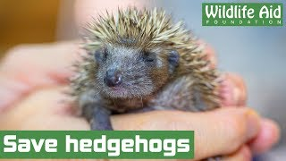 Help us to save hedgehogs!